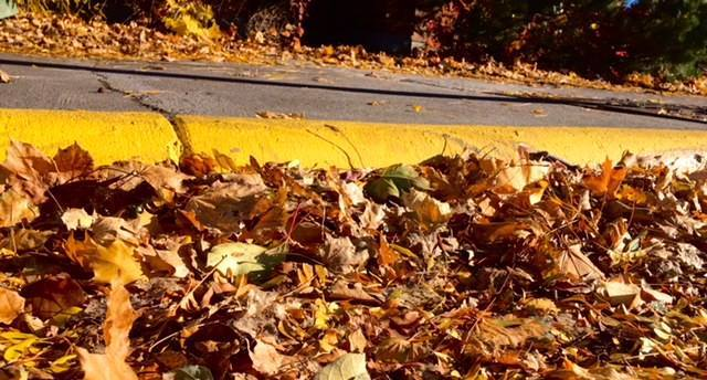 Fall leaves against the street curb