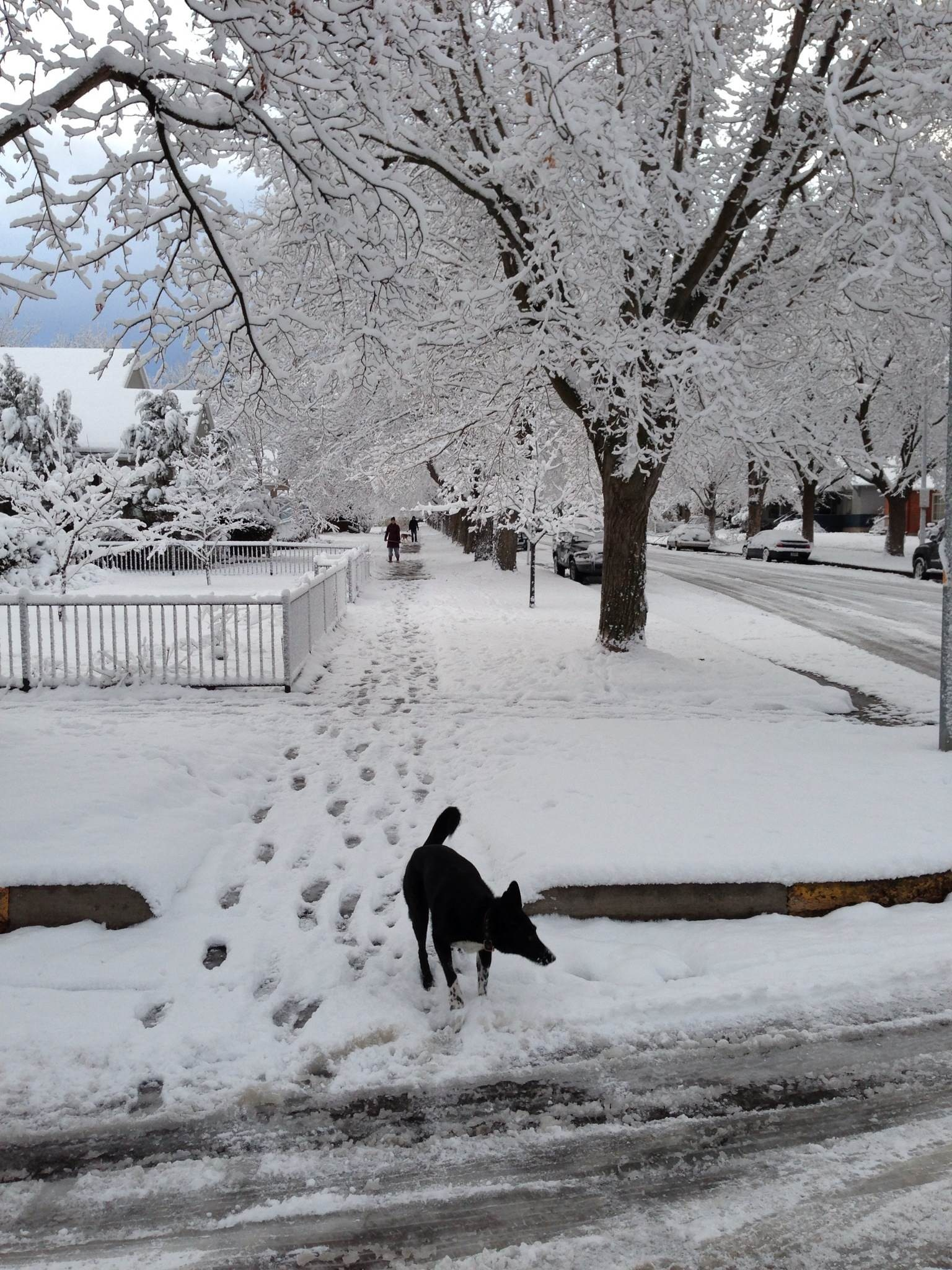 Dog in Neighborhood in Snow