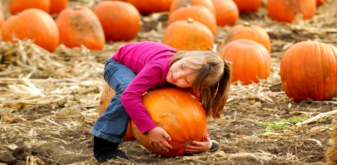 Little girl picking up a large pumpkin