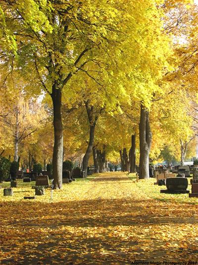 Leaf covered street lined with golden fall trees
